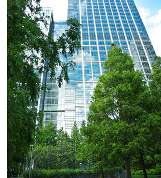 SFMS_Building_Trees_Image_Smaller_02